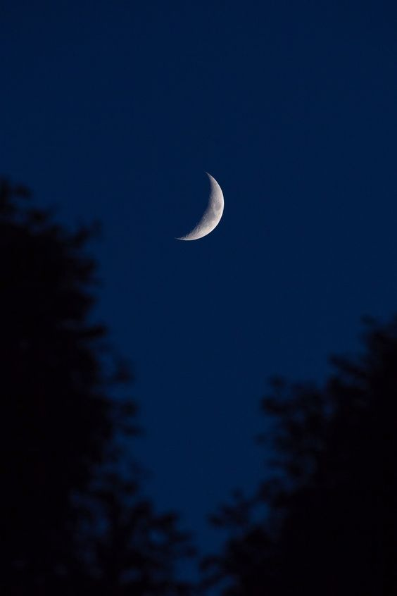 Crescent Moon Between Trees photo by Andy Holmes (@andyjh07) on Unsplash