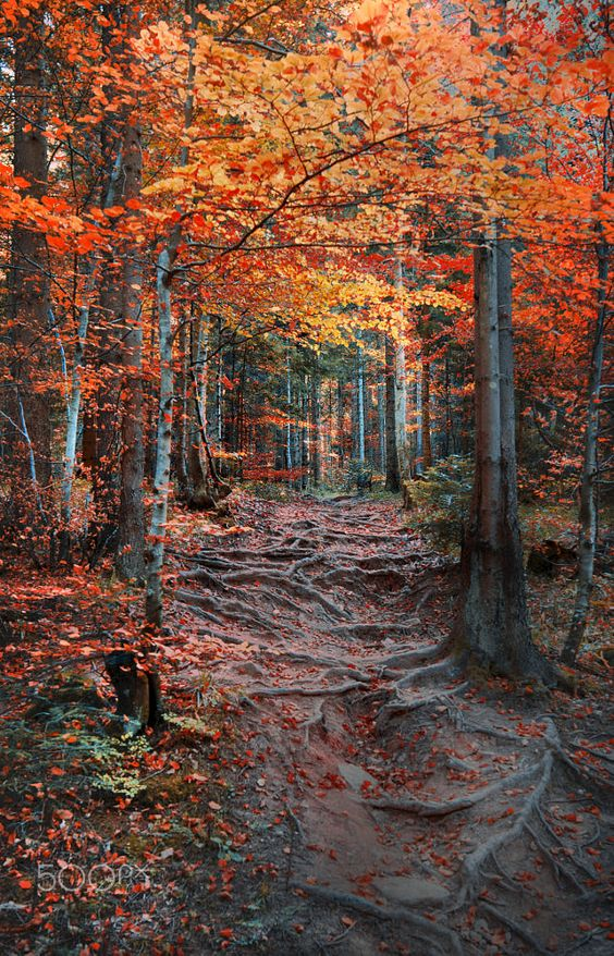 Forest Path by Mevludin Sejmenovic on 500px #forest #woods #trees