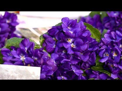 Provence : c'est la saison de la violette ! Booking now - Réservez votre séjour : http://www.fleursdesoleil.fr/maisons-hotes-provence-alpes-cote-azur.html