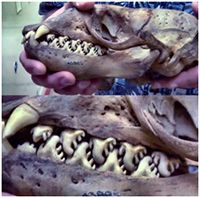 8 Animals with the Strangest Teeth You've Ever Seen http://t.co/Jetj2pCx5p