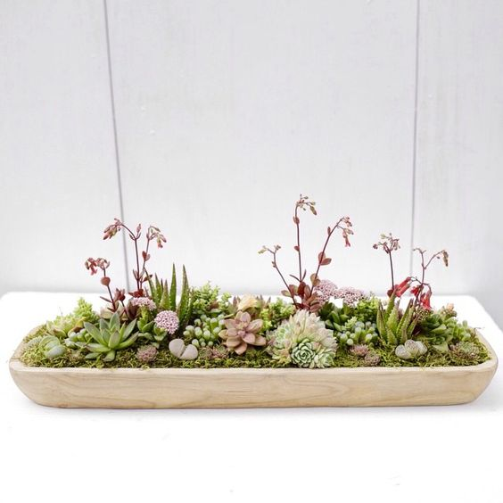 Dish Garden Succulents And Centerpieces On Pinterest