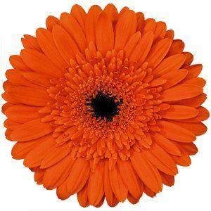 DIY flowers: orange gerber daisy blooms #diy #wedding #flowers