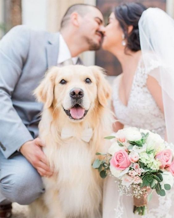 Dog with bowtie wedding photo. #dogs #dogsinweddings #weddings #weddingideas #flowers #weddingflowers