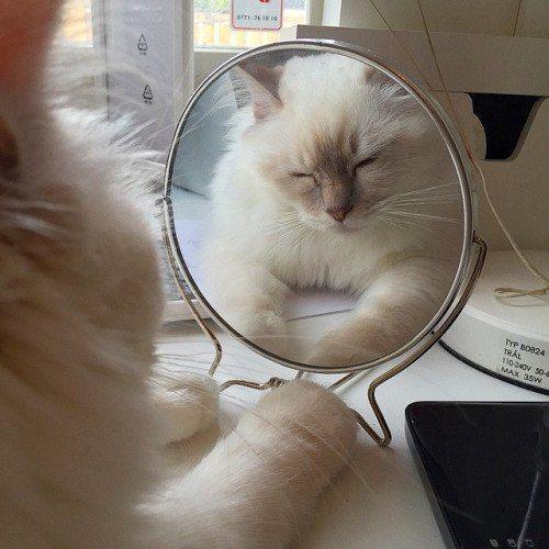 эстетично например | Очаровательные котята, Кошачьи фотографии, Милые котики