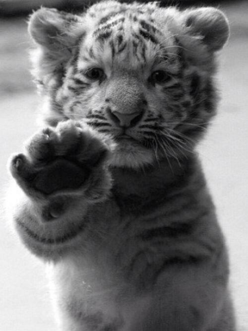 When a man wants to murder a tiger, it's called sport; when the tiger wants to murder him it's called ferocity.  --George Bernard Shaw