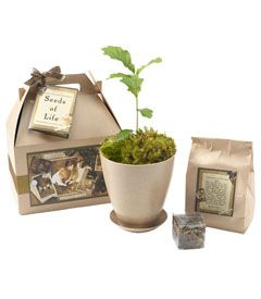 plant a tree to mark a special event/occasion