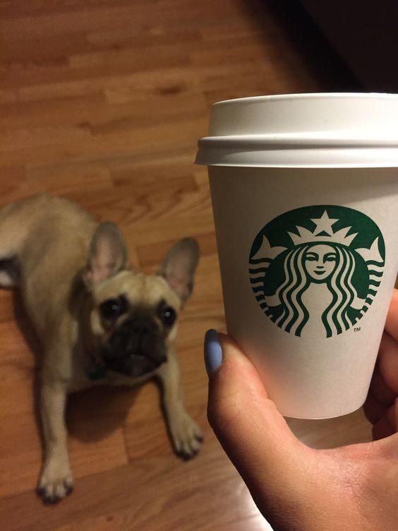 Starbucks for your dog!?