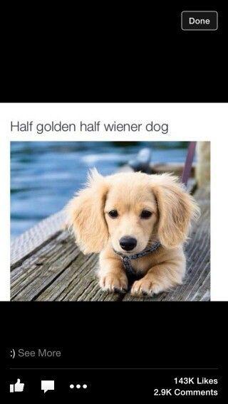 Half golden half wiener