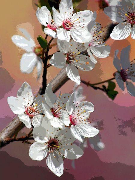 'Kirschblütenfülle'+von+Dirk+h.+Wendt+bei+artflakes.com+als+Poster+oder+Kunstdruck+$18.03