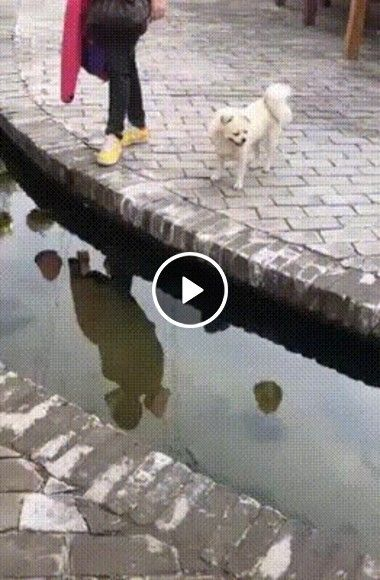 Testando a inteligencia do animal!