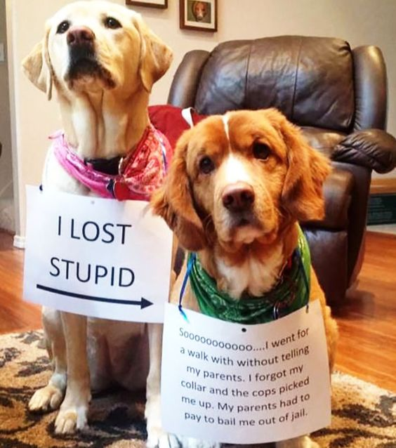 Best Dog Shaming Photos