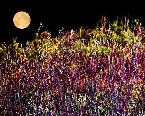 Favorites of Autumn by Karen Mathis on Etsy