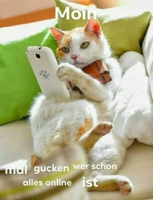 Pin Von Jas Auf Koty Guten Morgen Katze Seltsame Katzen Ich