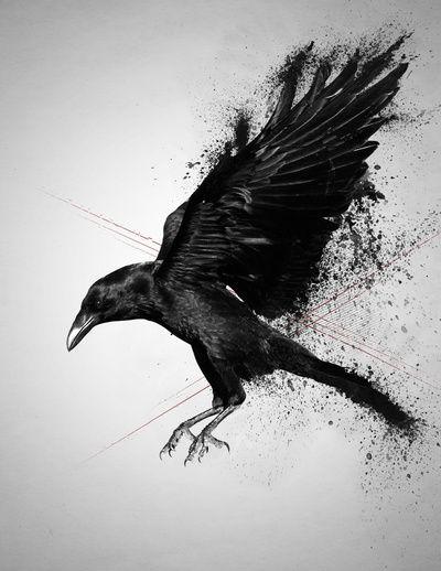 Crow by Adam Flynn
