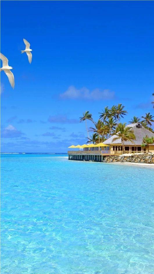 ハワイのビーチとかもめ
