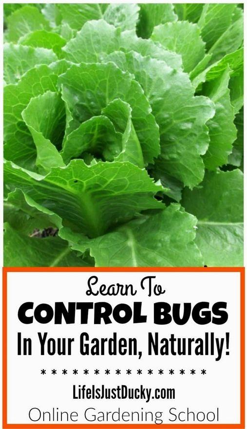 c0c716283e1a812d38dcf187f28d769f - Oklahoma Pesticide Applicator Law Rules And Regulations