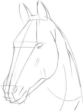 Resultado De La Imagen De Como Dibujar Una Cabeza De Caballo Paso A Paso Caballo Cabeza Dibuj Dibujo De Caballos Cabeza De Caballo Como Dibujar Un Caballo