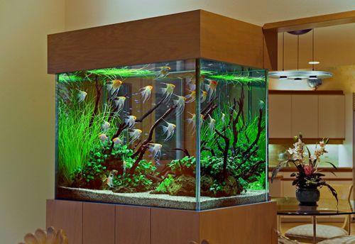 Image detail for decorating home interior with discus for Aquarium interior decoration