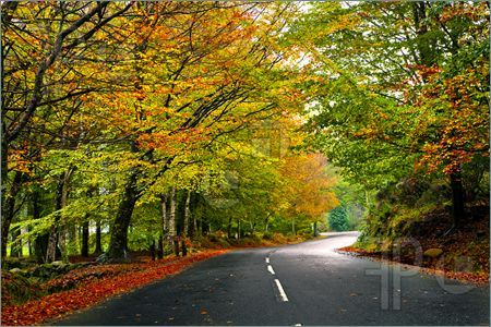 beautiful road images - Google Search