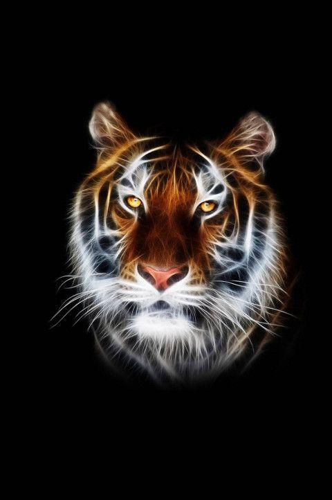 Tiger Black Amoled Wallpaper 4k Ultra Hd In 2020 Tiger Wallpaper Hd Phone Wallpapers Tiger Art