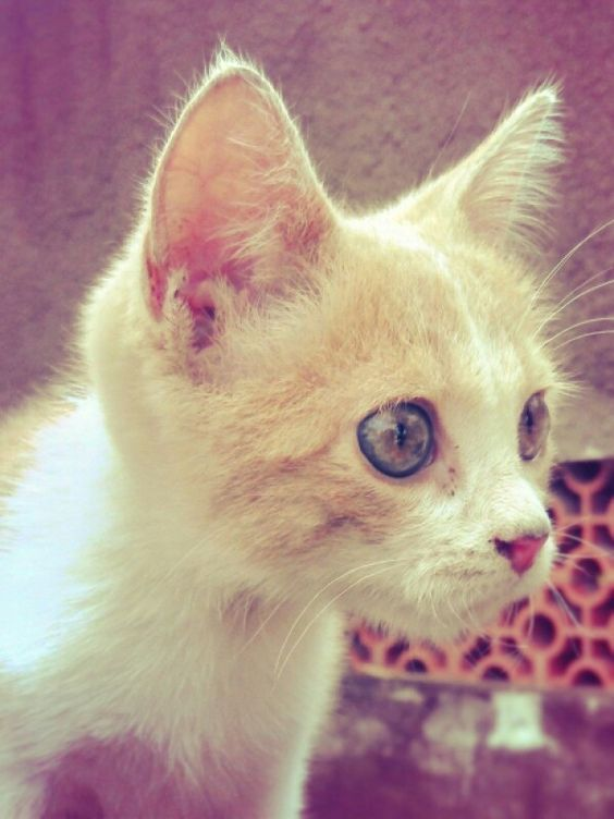 A beleza em forma de gato. Very cute.
