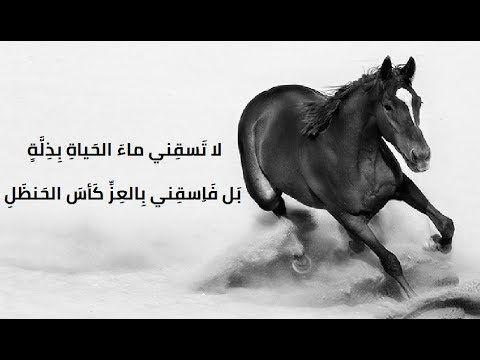 أروع ما قيل في الفخر وعزة النفس حكم سيوفك في رقاب العذل Youtube Horses Feelings Animals