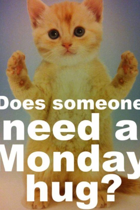 Mondays funny lol cat