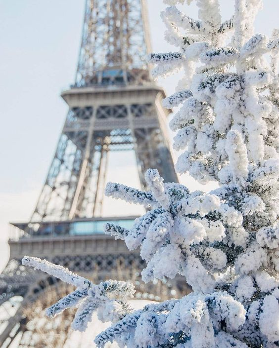 @herhappyhabits winter photography Christmas white snow pine tree France paris Eiffel tower