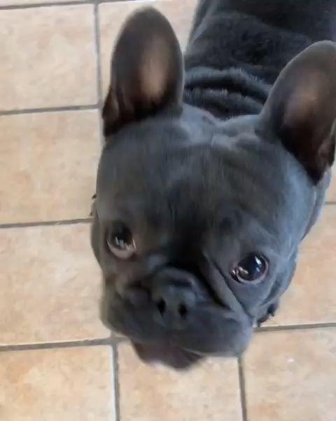 Name Name Name Woofadvisor Diy Dog Treats Doggie Frozen
