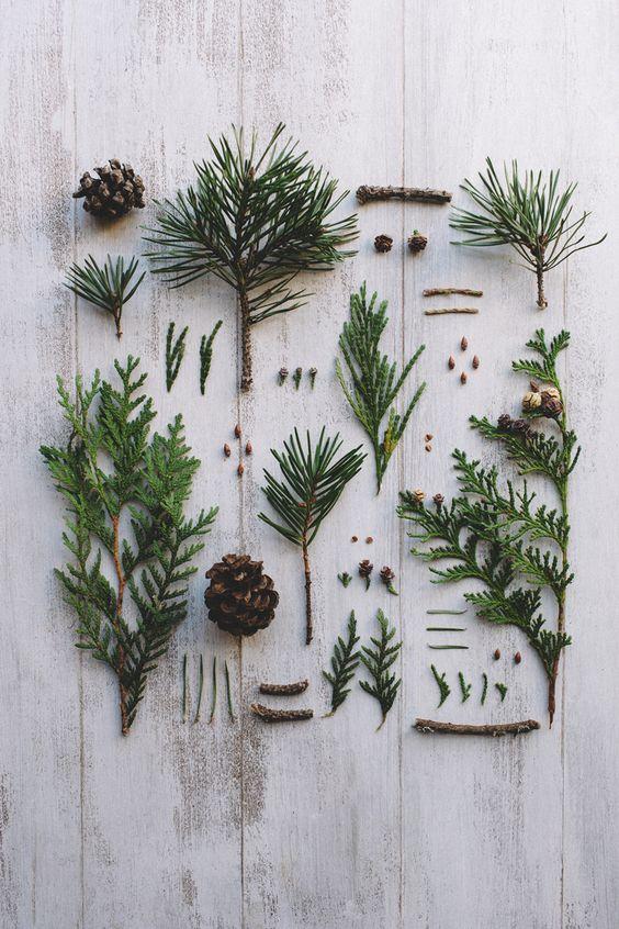 "jakfruit: "" Little native trees """