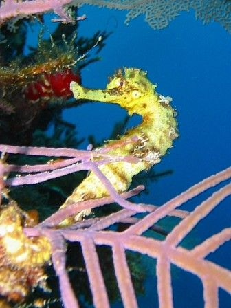 caballtio de mar en el agua                                                                                                                                                                                 Más