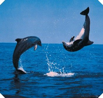 dolfijnen foto's - Google zoeken
