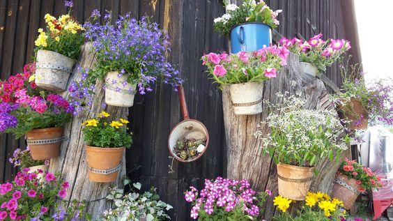 In den Pecherhäferl sind Wasserabzugslöcher. Eingepflanzt hab ich alles quer durch die Gärtnerei : Surfinien, Lobelien, Bidens, Solanum, Euphorbien, Verbenen, Lamium, Scaevola, Nemesien usw...