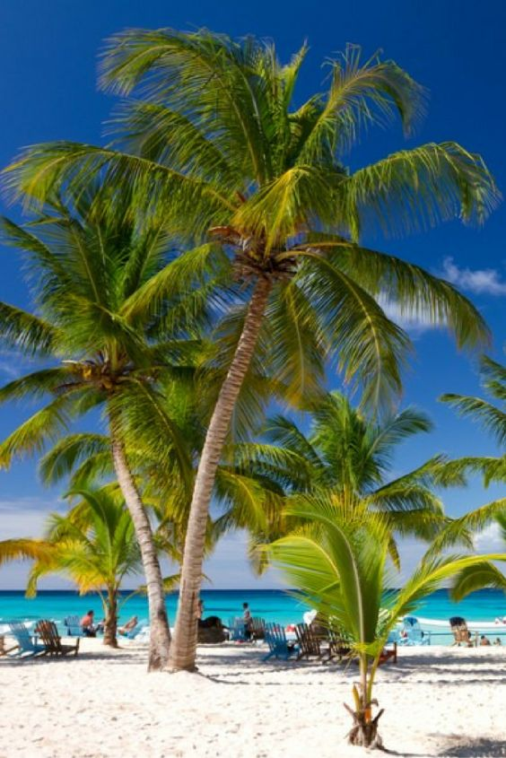 Drinken uit een kokosnoot, chillen op de lange witte stranden en genieten in de zon. Het kan hier allemaal! Leg je paspoort en zwemkleding maar vast klaar, want deze superdeal laat niet op zich wachten! 😍 https://ticketspy.nl/deals/drinken-uit-een-kokosnoot-op-de-dominicaanse-republiek-va-e635/