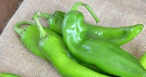 Hatch chile season is here!