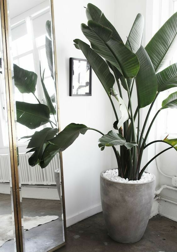 22 Large Indoor Plants To Add Coolness Every Room In Your