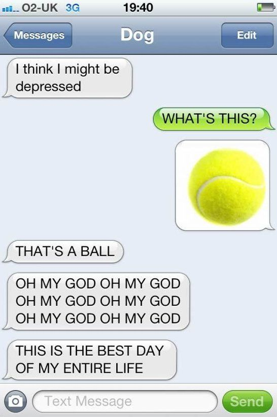 c0eef09928f9213e93bce5349fdf4521 hilarious texts funny dog texts sms from dog www meme lol com funny gifs pinterest meme