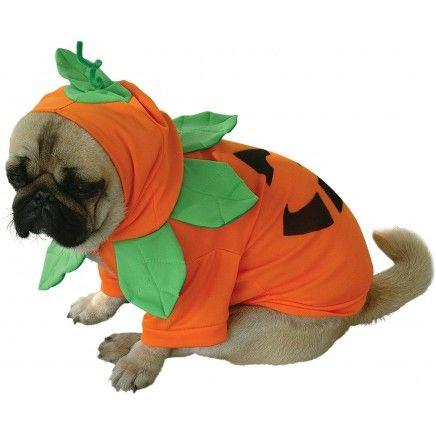 Costume de citrouille pour chien chiens pinterest halloween et d guisements - Deguisement halloween chien ...