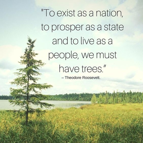 """""""To exist as a nation, to prosper as a state and live as a people, we must have trees."""" -Theodore Roosevelt.  Learn more about Wisconsin Land Conservation: http://gatheringwaters.org/about-us/info/mission"""