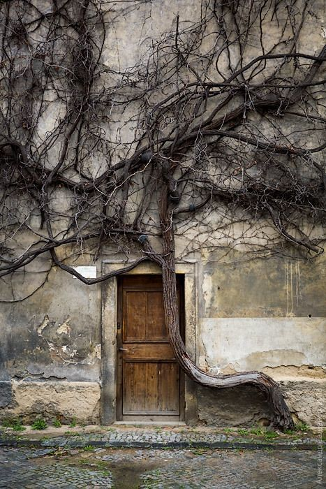 Tree Rooted Door…