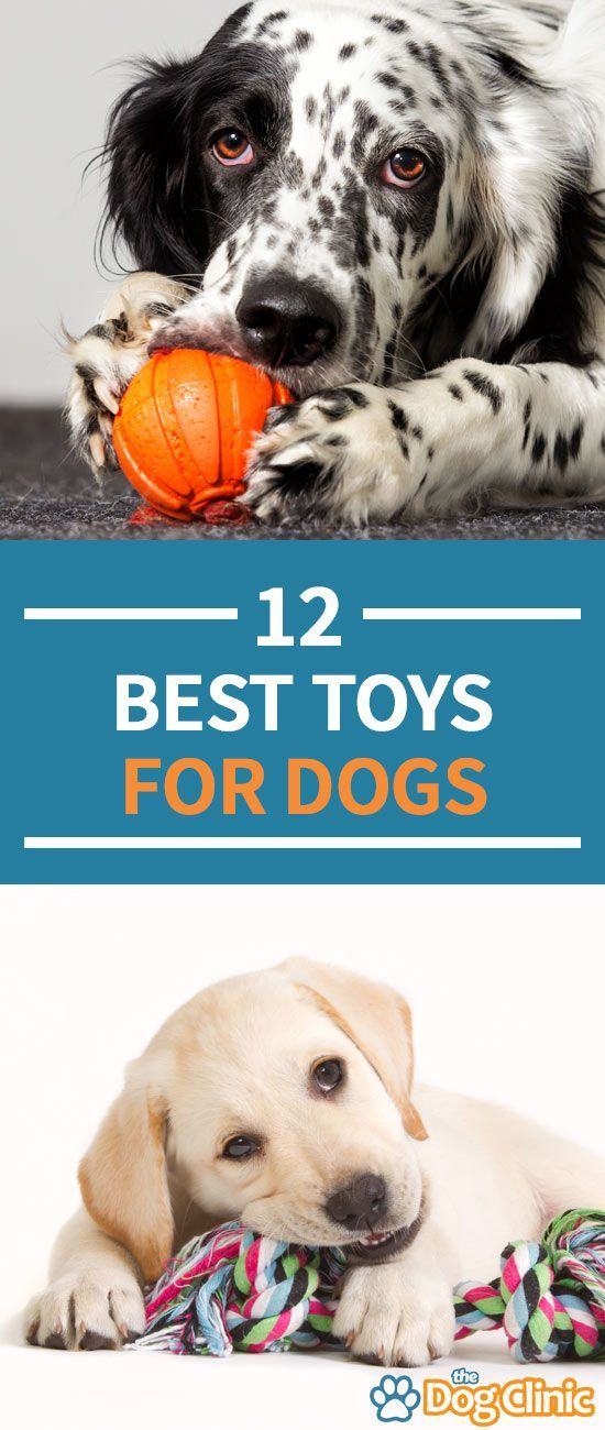 12 Best Dog Toys In 2020 Safe Durable And Fun For Your Pup In 2020 Best Dog Toys Dog Accesories Dog Toys