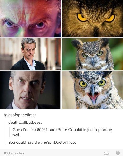 Peter Capaldi... Doctor Hoo lol. Doctor Who humor, or Doctor Whumor :)