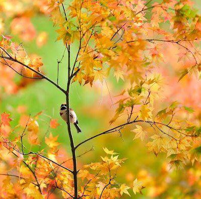 ave en el árbol