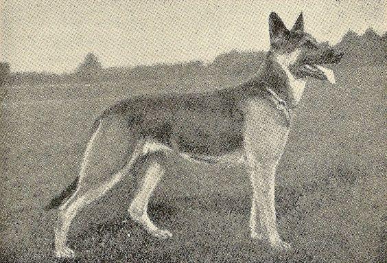 Flora Berkemeyer  The Foundress of the Riedekenburg Strain  Early 1900's