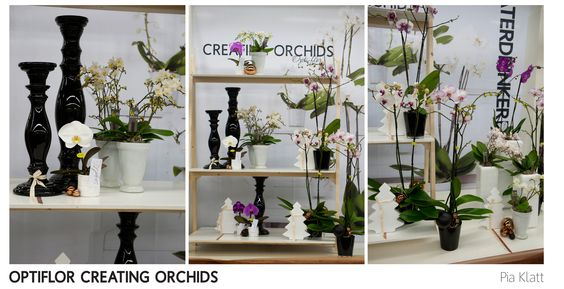 OPTIFLOR CREATING ORCHIDS