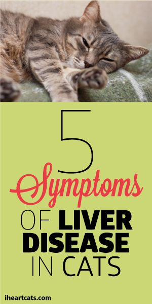 digestive enzymes for cats