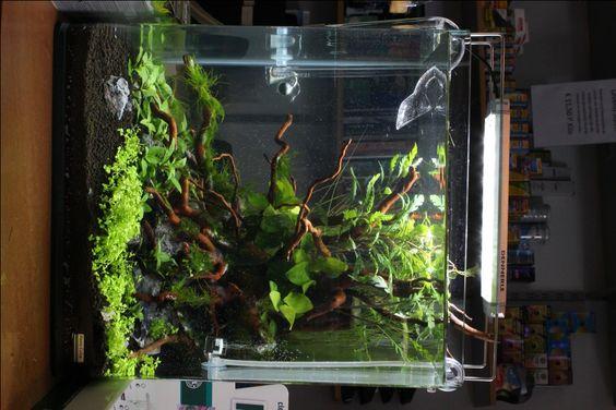 Dennerle 60 Liter Nano Cube | Aquascaping U0026 Aquarium Design | Pinterest