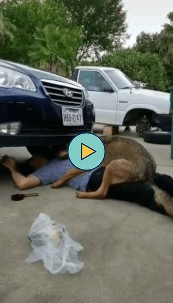 Cachorro quer carinho em quanto dono arruma um carro.