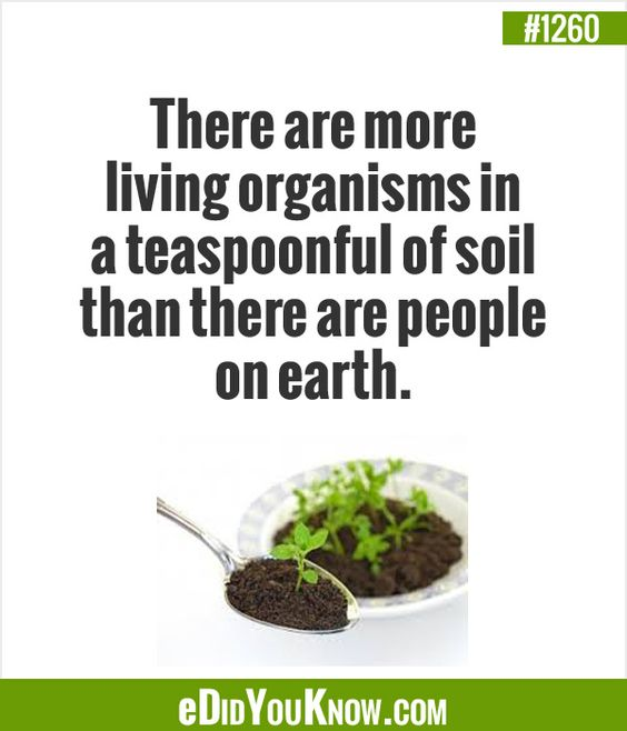 There are more living organisms in a for Things in soil