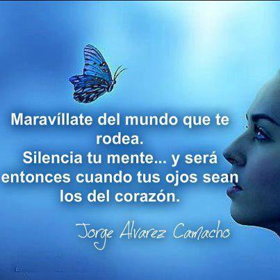 Como Mariposas C11238d29a8c657c6a0b8837a8229ed3